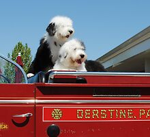 Fire Dogs by maryevebramante