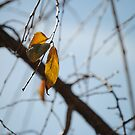 Last leaves of Autumn by maryevebramante