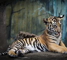 Magnificent Young Beast 2 by Manfred Belau