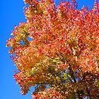 Autumn Colors in Blue Sky by John Carpenter
