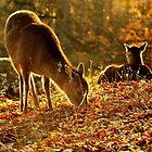 November sunlight by Alan Mattison