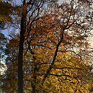 Autumn Portrait by SylviaHardy