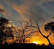 Sunset Along Dogtrap Road.-- Australia. by shortshooter-Al