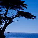 Lone Cypress tree by Alain Robillard