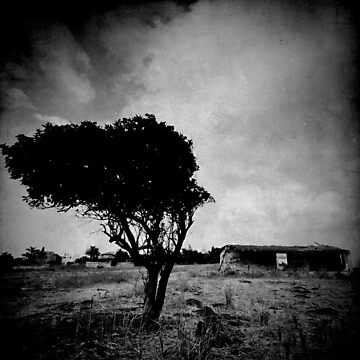 abandoned tree I by waitin' for rain