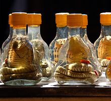 Bottled snake by Tony Roddam