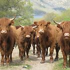 Highland Cattle, Scotland by KerryElaine