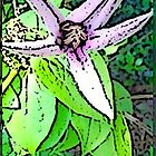 Cartoon Clematis by Susan J. Purpura