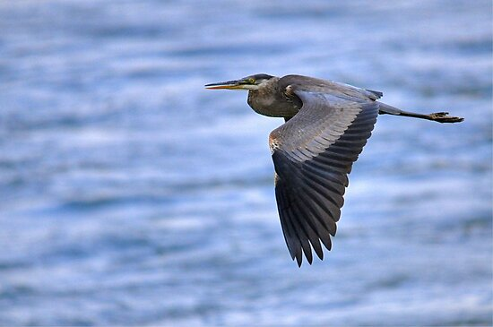 Super Heron  by Monte Morton