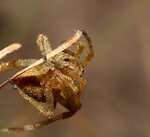 Acrobatic Arachnid by burnettbirder
