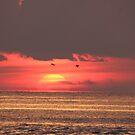Sunset at palm island by jozi1