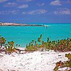 Paradise Found by Carol Barona
