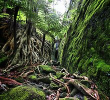 Slots Within Gorges, Carnarvon Gorge, QLD by Andrew Wallace