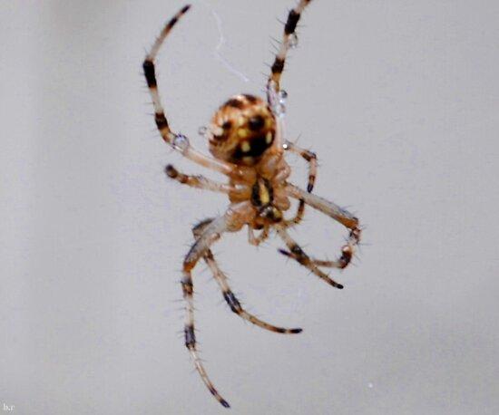 Spider Dew by blackrose25