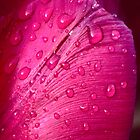 Water droplets on tulip by Kevin Allan