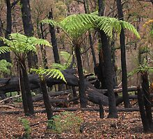 Burnt Tree Ferns by athex