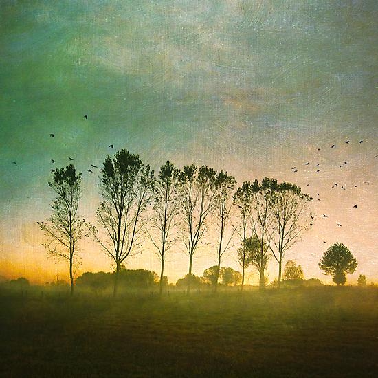 Morning Mist by Jill Ferry