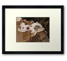 Caught In A Cuddle! Framed Print
