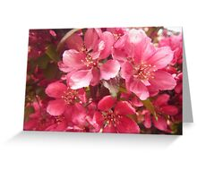 Pink Flower Blossoms Greeting Card