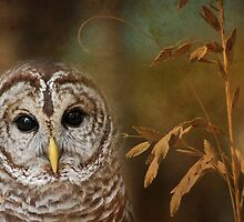 Barred Owl by Janice McCafferty