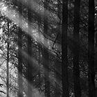 Wapley Wood by Phil Lane