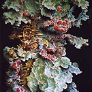 Colony of Tasmanian Lichen by dyas