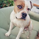 Capone by ruthlessphotos
