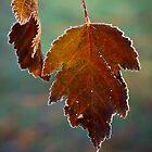 Frosty Leaves by LeeAnne Emrick