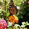 Butterfly Beauty by Carol Bock