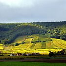 On the Road: Vineyards in France by Gayle Dolinger