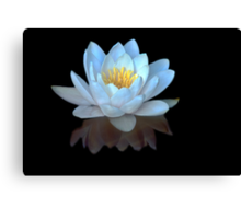 Water Lilly Meditation Canvas Print