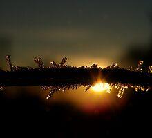 Frosted Sunrise by MistyAdkins