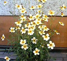 streetside flowers japan (nfs) by A.S. Municino