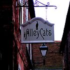 Alley Cats! by patjila