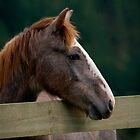"""""""Speckles"""" - Cylde Cross Pony by Sophie Lapsley"""