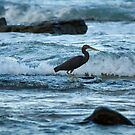 Wading Bird in Surf at Twilight by Helen Barnett