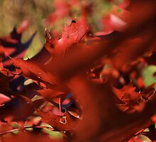waving red by Jeff Stroud