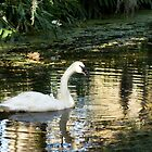The Solitary Swan by Widcat