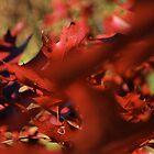 leaf 9 by Jeff Stroud