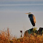 One Footin' - Great Blue Heron by Mark Heller