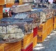 Thursday at Barcelos Market, Portugal by Zahrah  Nesbitt-Ahmed