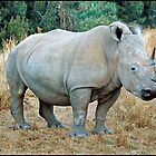 White Rhino Pilansberg by ten2eight