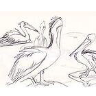 More Pelicans by WoolleyWorld