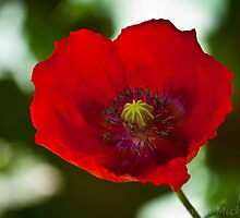 Lest We Forget by Simon Michelmore