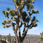 Joshua Tree by Brian220