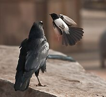 Altercation by Tom Newman