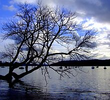 Tree on windermere by snapitnc