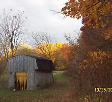 HOMESTEADING IN THE BOONIES by pscline
