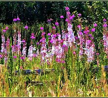 Nature's Garden by Brenda Boisvert