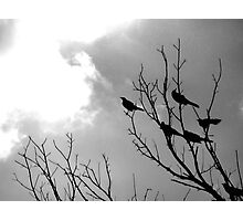 The Watchers Photographic Print